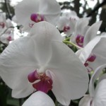 Finally, some orchids I recognize.