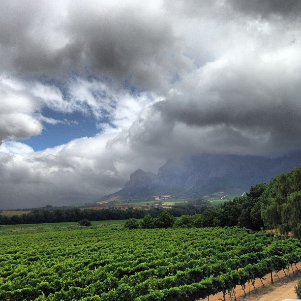 The Vrede en Lust vineyards in Franschoek - absolutely stunning.