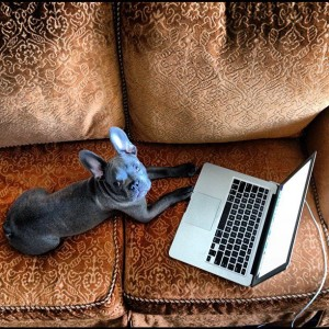 Miles hangs out on the couch in the room and catches up on email.