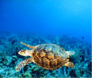 Grab a charter boat for a memorable snorkeling or diving experience in or around Key West.