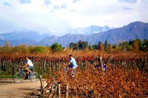Combine sports and wine on a bike tour through the wineries.