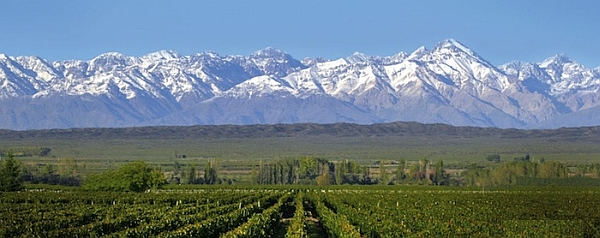 mendoza-vineyards