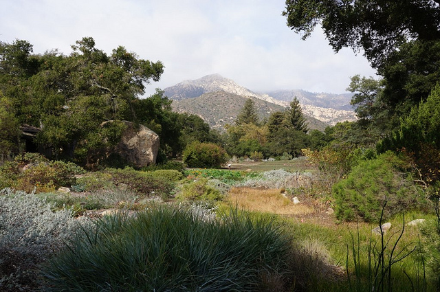 The central meadow at the 1926 Santa Barbara Botanic Garden offers a view of the Santa Ynez Mountains
